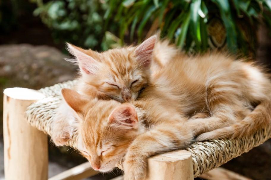 Kissojen Luovutusikä